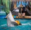 Дельфинарии, океанариумы в Северской