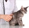 Ветеринарные клиники в Северской